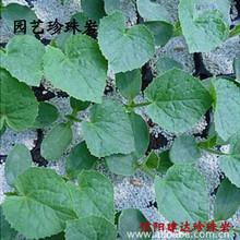 大量批发优质园艺珍珠岩,栽培基质,保水保肥,无土栽培