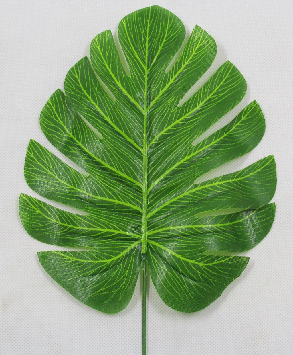 不同种类的树叶图片