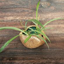 日式粗陶茶盘茶道配件 多肉水生植物花盆小盆景 特色石头烟灰缸