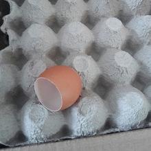 批发儿童创意仿真彩色鸡蛋壳 复活节彩蛋原料真蛋壳 一件代发