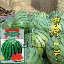 京欣一号西瓜种子寿光蔬菜种子套餐批发家庭盆栽四季播易种新红宝