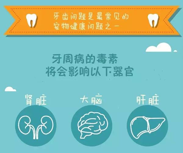 杭州虹泰宠物医院|宠物牙齿保健很重要!