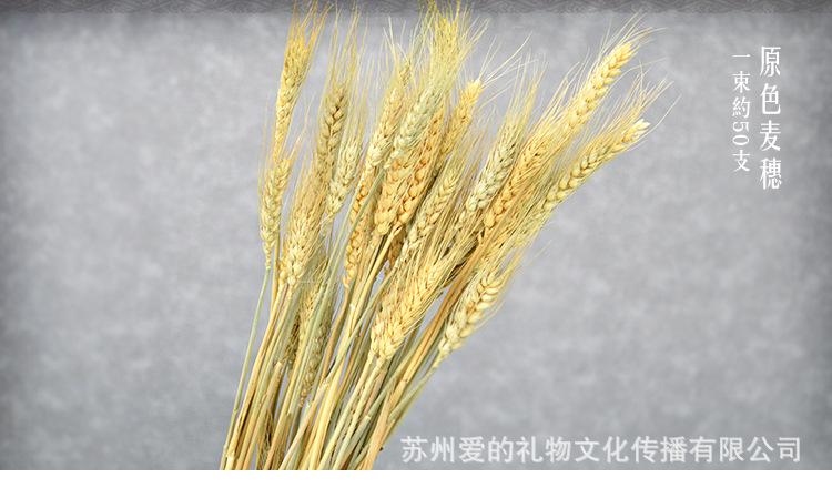 工艺 手工制作 加工定制 是 产品编号 lw-12 类型 枝条 品种 麦穗