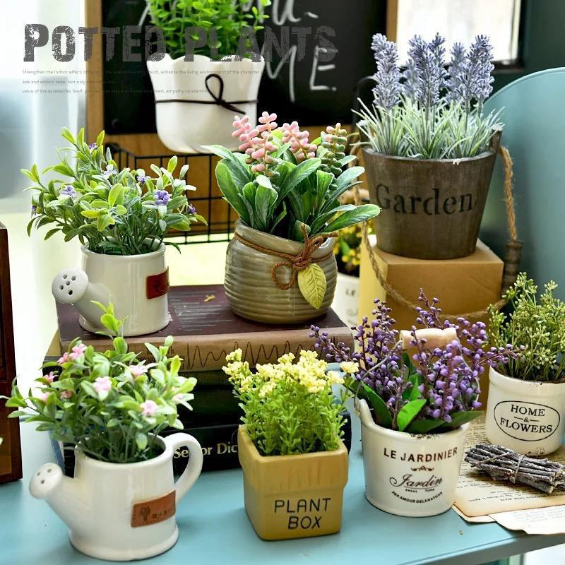 室内可爱盆景观赏办公室绿植办公桌客厅宿舍房间女生盆栽摆小种植
