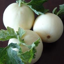 特大白沙蜜甜瓜香瓜种子 更甜更白更美 早熟不裂果 糖度15 约50粒