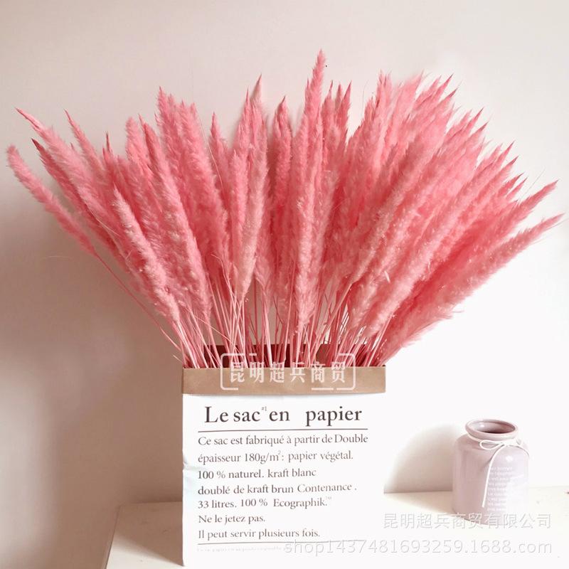【干花小芦苇】inss粉色芦苇 网红小芦苇干花家居装饰 蒲苇