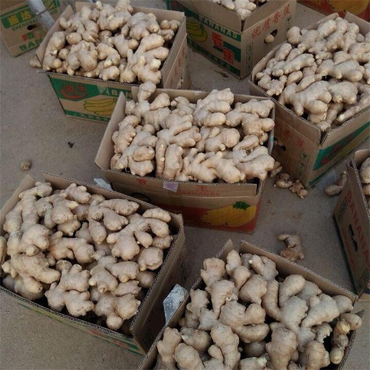 山东价格价格,地直出售,老姜,小黄姜,鲜姜生姜产生姜实木家具床头图片