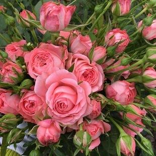园艺花卉图片