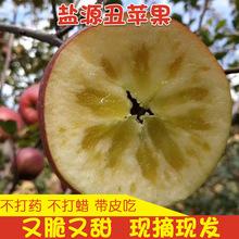 四川大涼山鹽源丑蘋果紅富士冰糖心野生應季新鮮8斤水果包郵