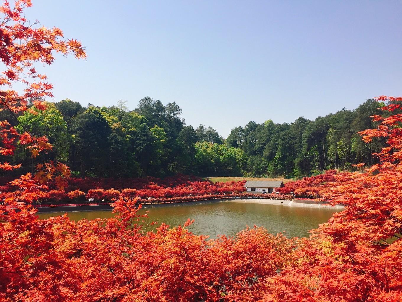 """【转载】春季的""""红叶""""之旅,在南湖"""