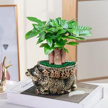 發財樹盆栽室內花卉小盆景辦公室綠色植物客廳招財金錢樹盆栽綠植