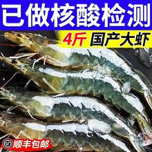 大虾海虾鲜活冷冻白虾对虾基围虾大虾新鲜海捕大虾青虾虾仁顺丰