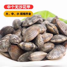 新鲜花蛤鲜活无沙杂色蛤中美贝沙蚬子海鲜水产蛤蜊联发花甲贝类