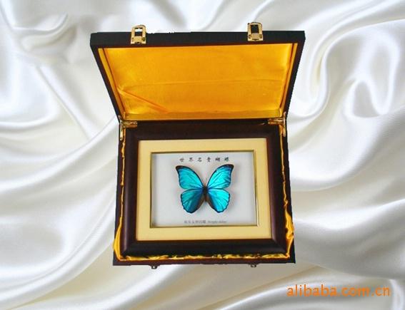 蝴蝶标本礼品 工艺品 蝴蝶标本 收藏品 昆虫标本