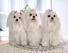 宠物狗养殖