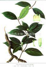 植提厂商供应植物提取物 巴戟天提取物 质优价廉