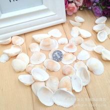 海螺贝壳白毛螺蛤子贝家居地台鱼缸装饰DIY手工制作品工艺品制作