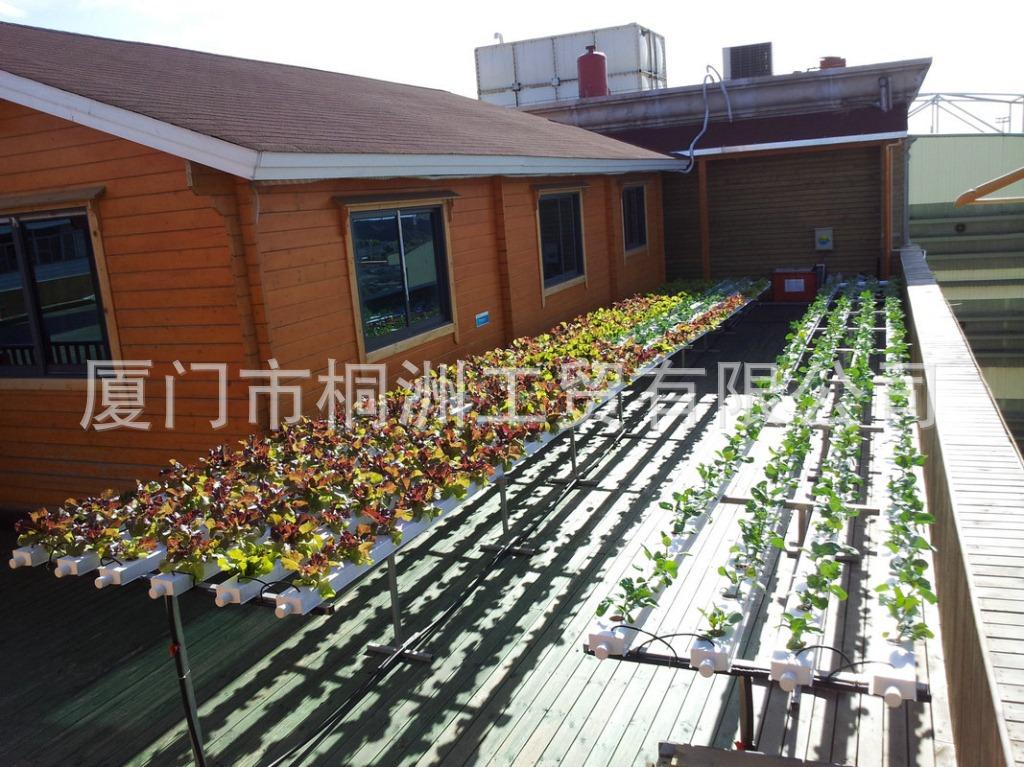 蔬菜基地无土栽培种植 无土栽培技术家庭农场 阳台庭院无土栽培
