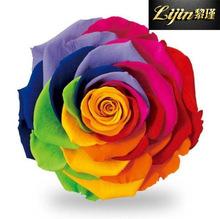 9-10cm厄瓜多爾進口巨型七彩玫瑰永生花花頭高端花材禮盒花材配材