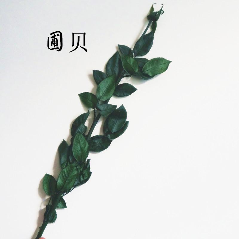 厂家供应 保鲜花高品质玫瑰枝条 带花托 室内保鲜花枝条现货批发