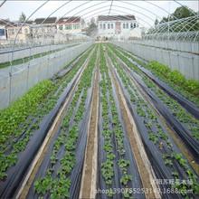厂家批发加厚地膜 农用 黑色 防水 塑料黑薄膜 白色地膜除草专用