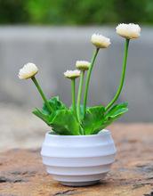 陶瓷花盆迷你多肉桌面小盆栽綠植花器小園形細紋家居擺件廠家直銷
