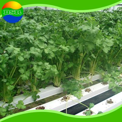 无土栽培大量销售 阳台蔬菜无土栽培 无土植物栽培设施无土花卉