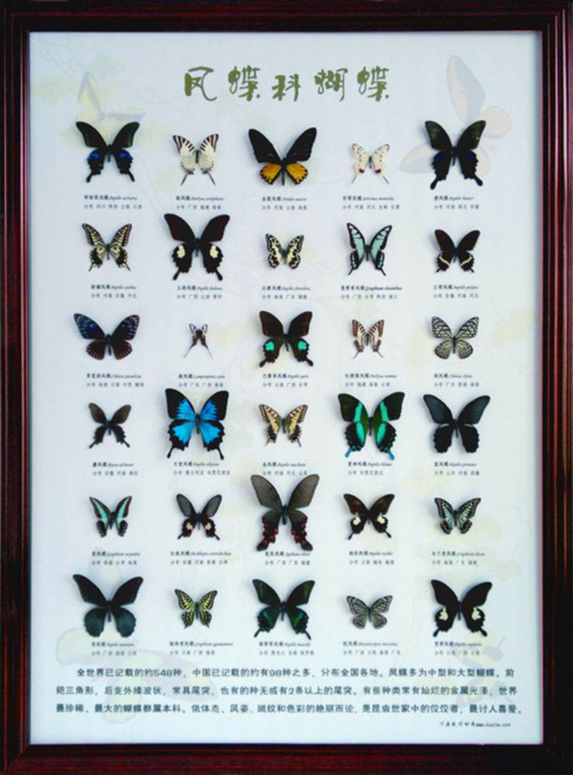供应教学标本 科研标本 昆虫标本 蝴蝶展展品 蝴蝶标本批发