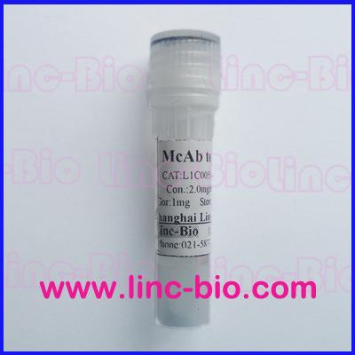 鼠抗人癌胚抗原抗体Anti-CEA antibody 抗体/ Anti-CEA McAb