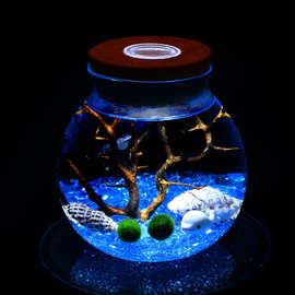 批发海藻球生态瓶带灯 微景观生态瓶 软木塞带灯圆形玻璃密封罐