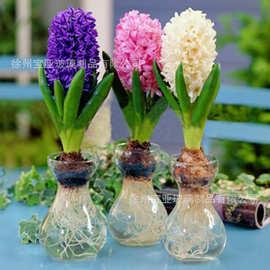 风信子透明玻璃水培容器 水仙花瓶 玻璃花盆水培瓶插植物器皿C164
