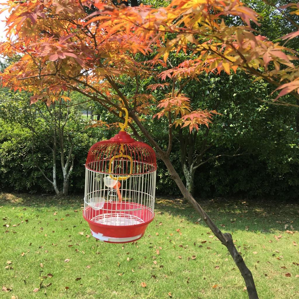 精致铁丝鹦鹉笼  画眉鸟笼子  新款圆笼 珍珠文鸟鸟笼