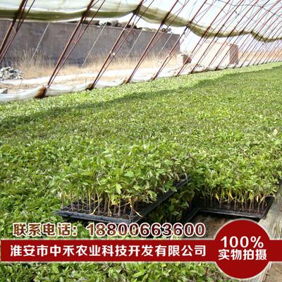46出售水稻育秧基质 量大从优  水稻基质 育秧基质 水稻育苗基质