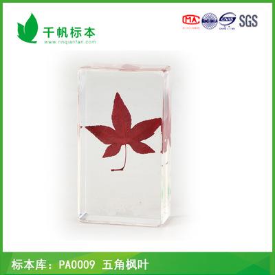 千帆标本 PA0009五角枫叶 动植物标本 厂家批发