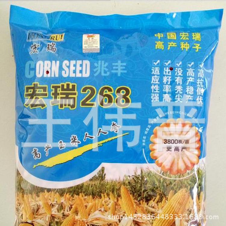 大田作物青贮玉米种子种子宏瑞268玉米种子早熟玉米种耐低温玉米