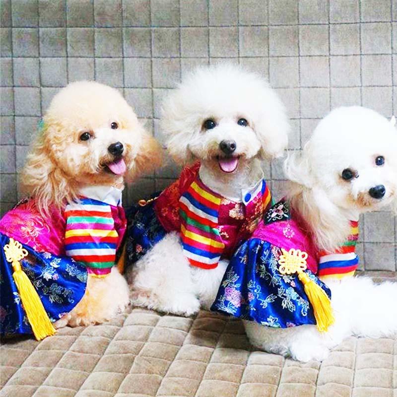 跨境新款韩国民族宠物服装 传统绣花宫廷韩服 夏季狗衣服批发