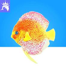 鱼缸装饰 仿真热带鱼 水族夜光塑料鱼 2016七彩神仙鱼