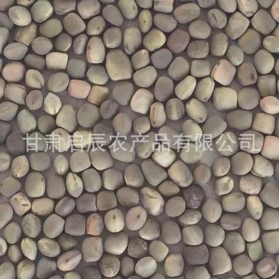 供应箭舌豌豆 箭舌豆 建设豆 建设豌豆 小灰豆 箭筈豌豆 绿肥种子