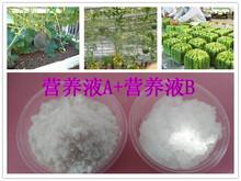 西瓜无土栽培肥料eco-organic type soilless culture肥料