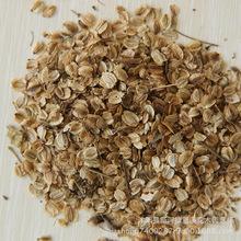 低价供应中药材种子优质当归种子 当归种子批发 药材种子