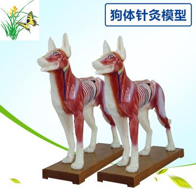 狗体针灸模型 狗体解剖模型 动物解剖模型 动物犬狗穴位模型