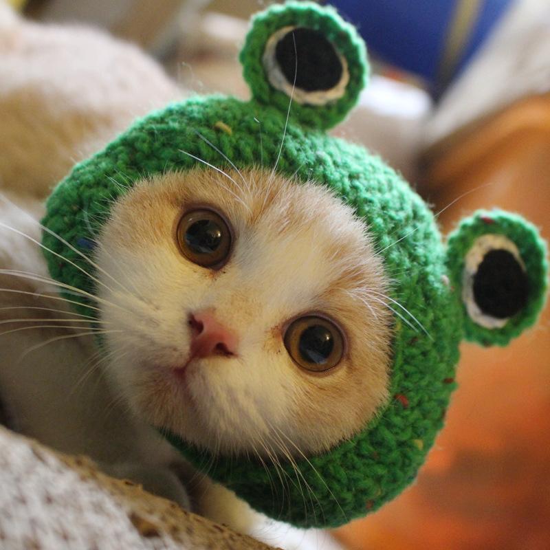 手工编织帽_外贸爆款青蛙猫咪帽宠物手工编织帽猫咪英短幼猫毛线帽批发 - 阿里巴巴