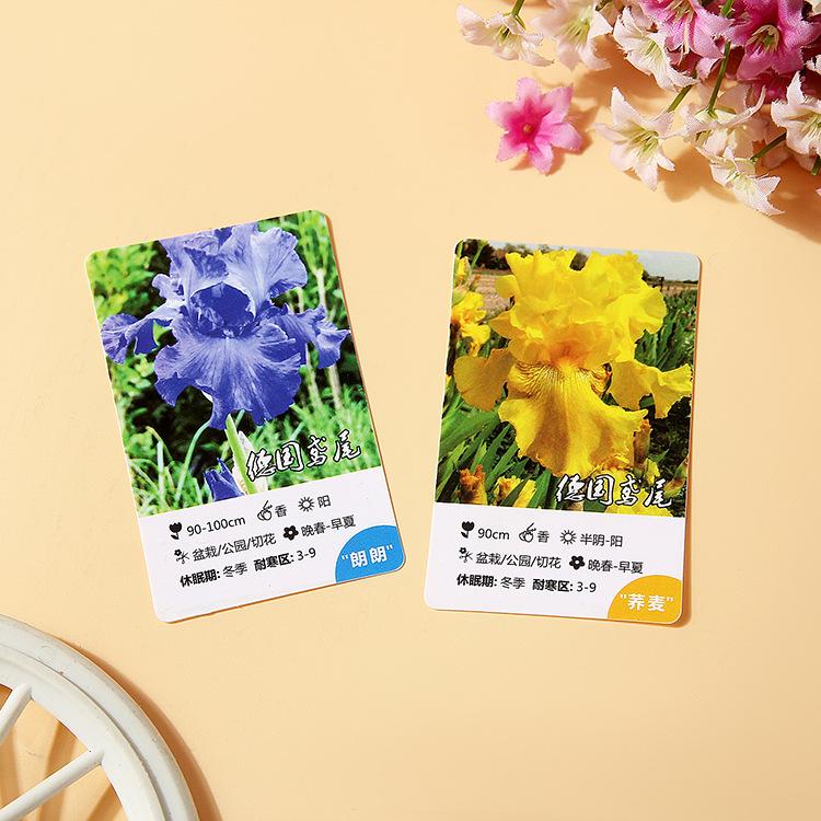 花卉工厂定制磨砂彩印图案PVC卡PP塑料卡 免费设计包邮