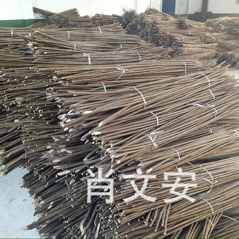 大型种植基地直销大量优质蒸柳 白柳 可用于工艺编织