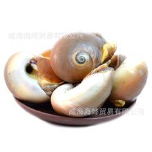新鲜野生鲜活香螺 大香螺  扁香螺  海鲜鲜活水产 新鲜海鲜 批发