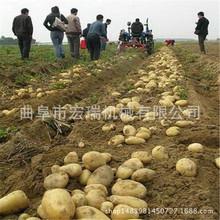 小型手扶带动马铃薯土豆收割机价格 土豆收获机多少钱一台