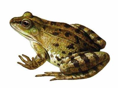 林蛙万博manbetx手机登录网页