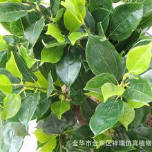 仿真植物树叶香樟叶立体樟树叶子乔木绿植装饰拍摄景观工程批发