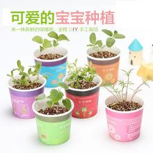 创意微景观迷你可爱盆栽小盆景摆件 DIY办公室桌面生态植物种子