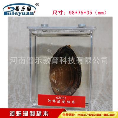 供应河蚌浸制标本 43051生物教学仪器 初中高中配套标本